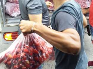 Vendo fresas al por mayor