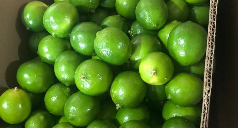 Limón persa exportable
