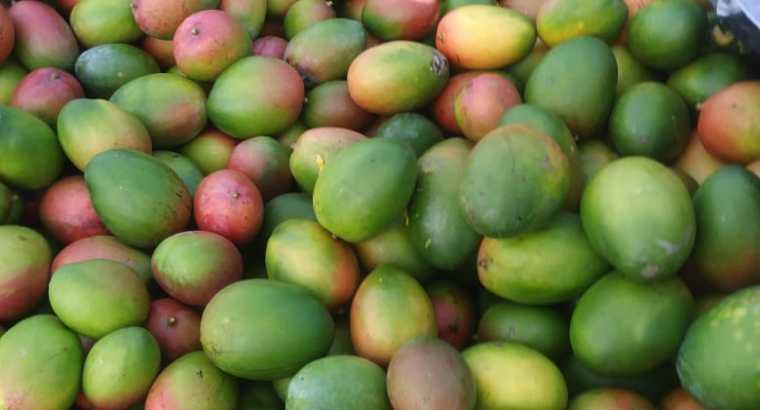 Mangos por camiones