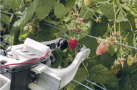 Reino Unido crea  Robocrop, el nuevo robot recolector de frutos rojos