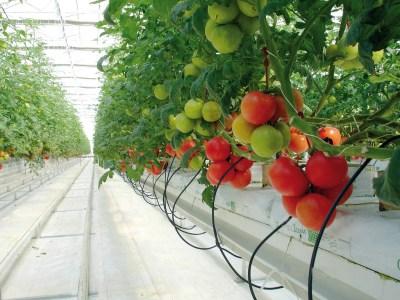 Ingeniería bioclimática, necesaria ante el panorama actual
