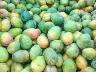 Vendemos mangos