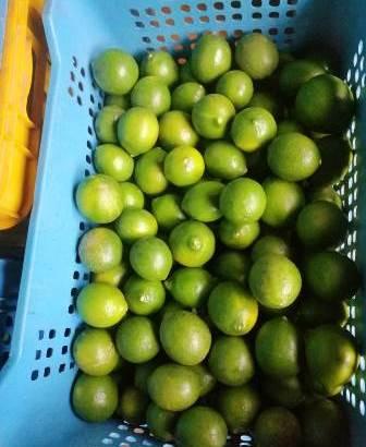 Vendo limón palestino