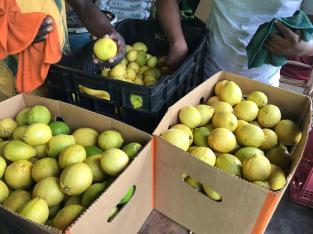 Limón eureka exportable
