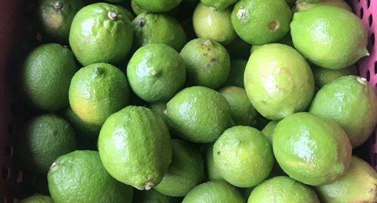 Tenemos limón eureka