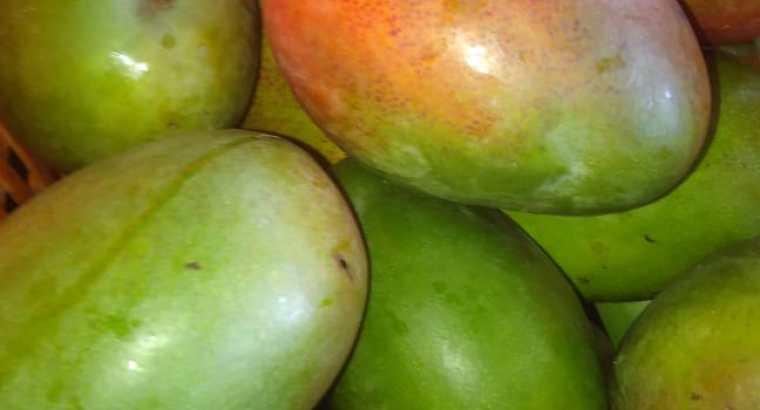 Vendo mangos keitt