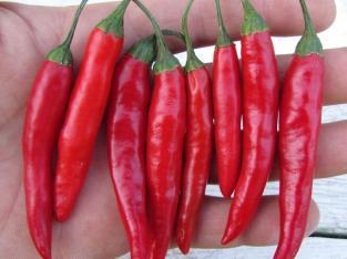 Compro thai chile