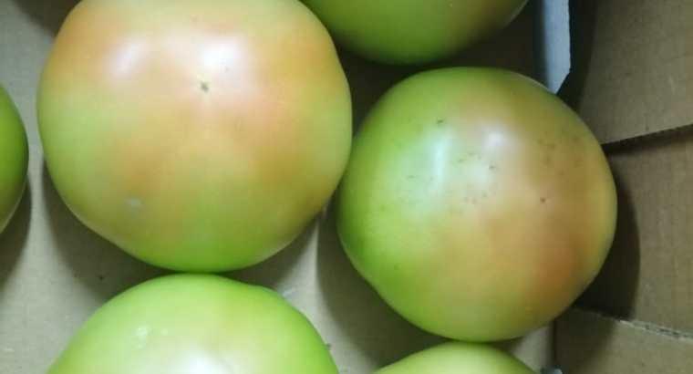 Compro tomates ensalada