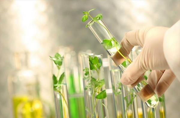 Nuevos avances en la investigación sobre cultivos autofertilizantes