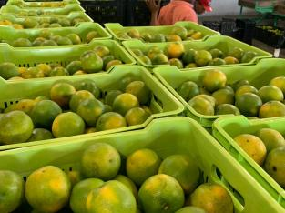 Naranjas valencianas selectas