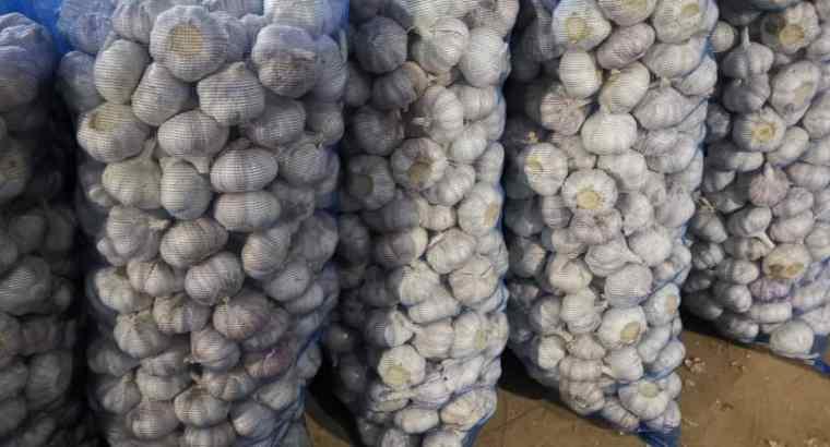 White chinese garlic