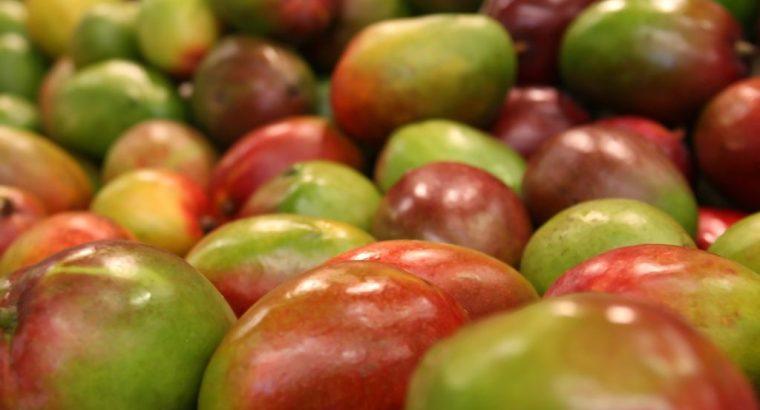 Manejo nutrimental integral de cultivo de mango