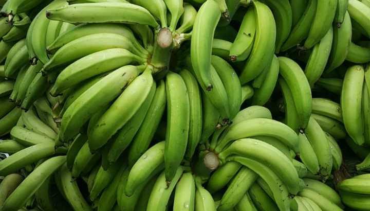Se vende plátanos criollos