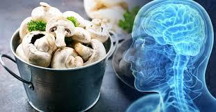 El consumo de champiñones disminuye el riesgo de padecer demencia senil