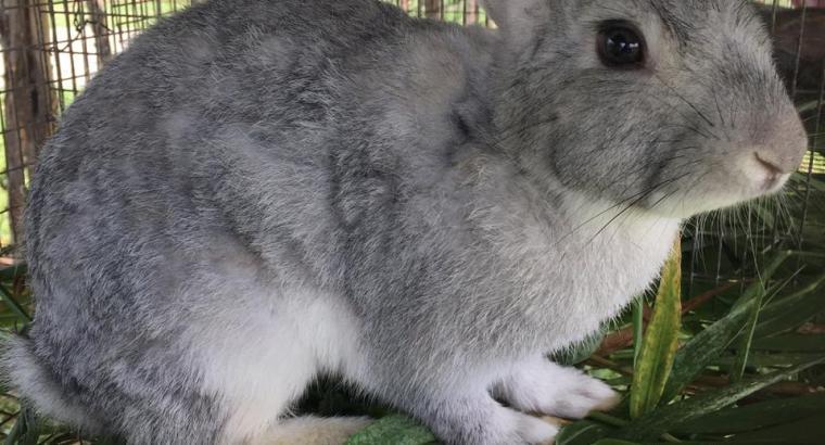 Vendemos conejos