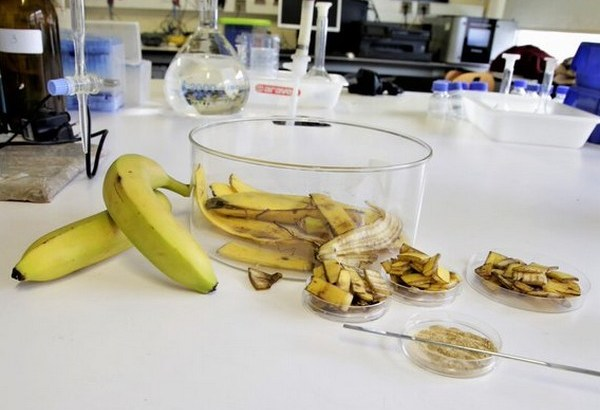 Científicos portugueses descubren que la piel de la banana purifica el agua
