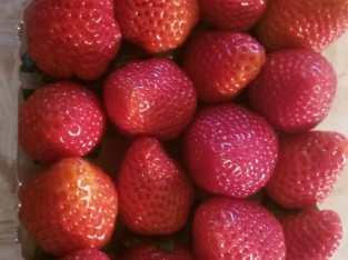 Fresas al por mayor