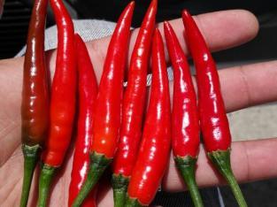 Ají thai chile
