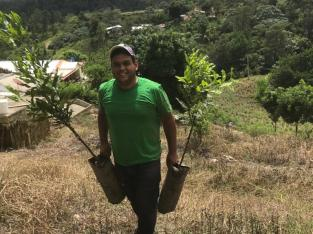 Plantas de macadamia