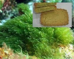 Las microalgas: el alimento del futuro
