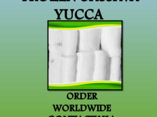 For Sale Frozen Yucca