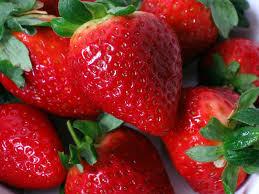 El aceite de CBD podría extender la vida útil de las fresas