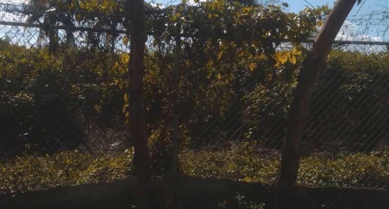 TERRENO DE VENTA E LA REPÚBLICA DE COLOMBIA SANTO DOMINGO