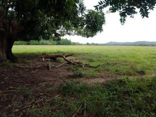 FINCA DE 3,400 TAREAS DE VENTA EN MONTE PLATA