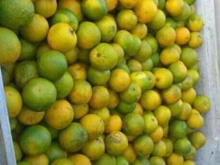Naranjas agrias al por mayor