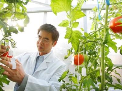 """Unos científicos descubren el potencial de la fruta """"baja en azúcar"""""""