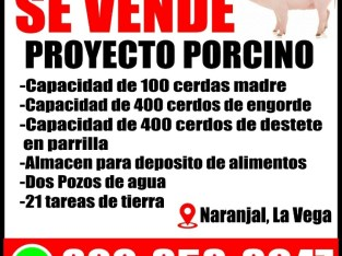 Proyecto porcino (Granja)