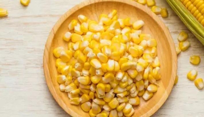 Semillas de maiz hibrido