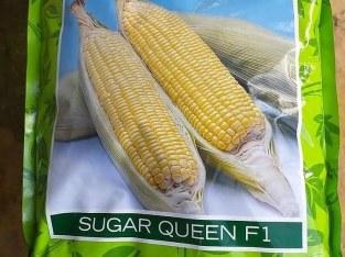 Semillas de maiz dulce