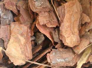 Corteza de Coníferas (pino)