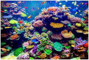 recifes_coral