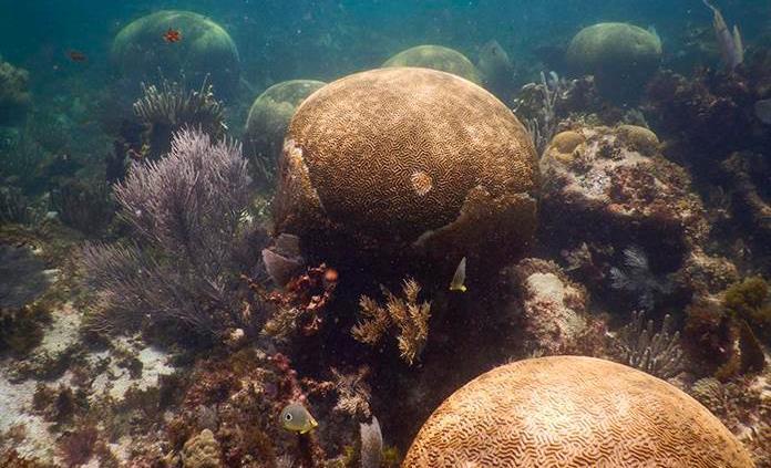 México: Expertos advierten que Arrecife Mesoamericano se deteriora  rápidamente (Pulso) – Agua.org.mx