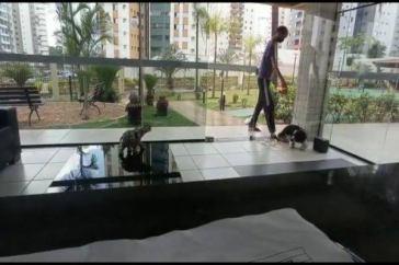 Homem foi preso por maltratar cães em Águas Claras