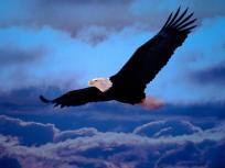 aguia-5770