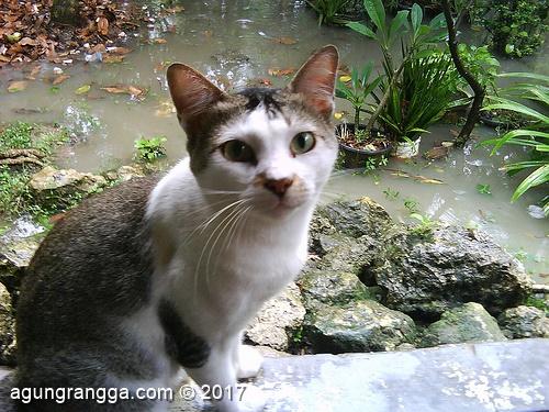 kucing yang turut merenungi nasib