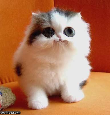 cute_cat.jpg