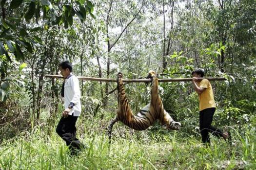 Ilustrasi manusia berburu macan - Gambar diambil dari Kompasiana.com