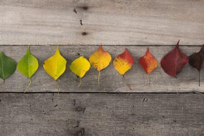 cómo conservar hojas