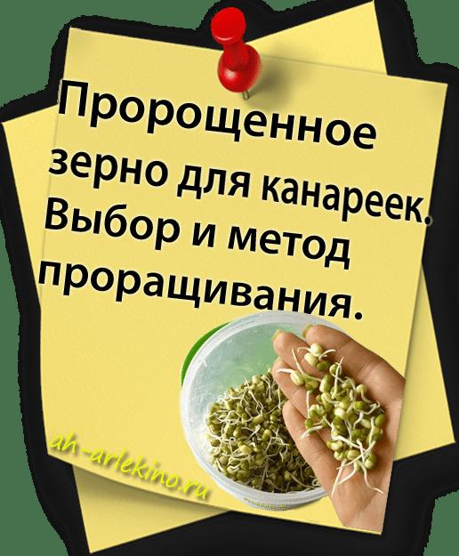 пророщенное зерно канарейке