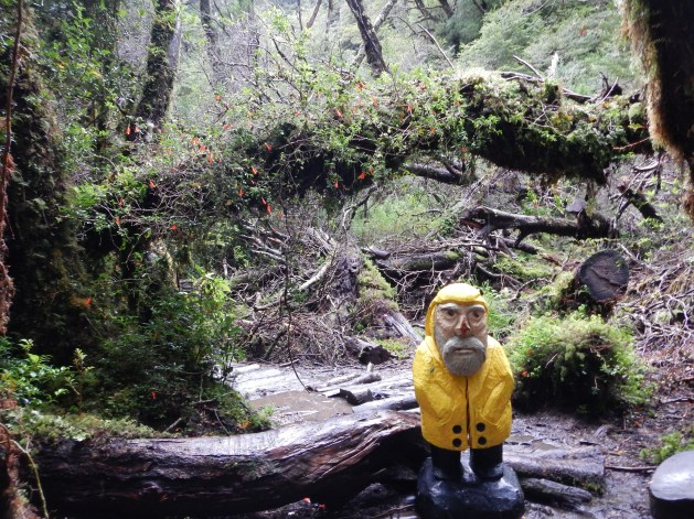 Captain Ahab of Ahab's Adventures in the Enchanted Forest trekking to the Lagoon of the Gnomes in Queulat National Park Chile 2017