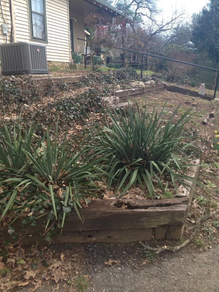 backyard rock garden