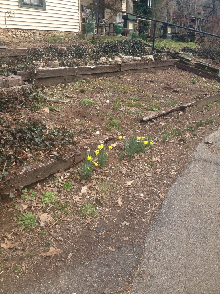 spring flower bed clean up