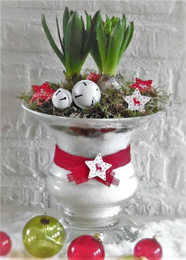 Image Of Christmas Centrepiece Plant Arangement