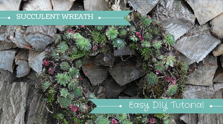 image of wreath made from succulents plants