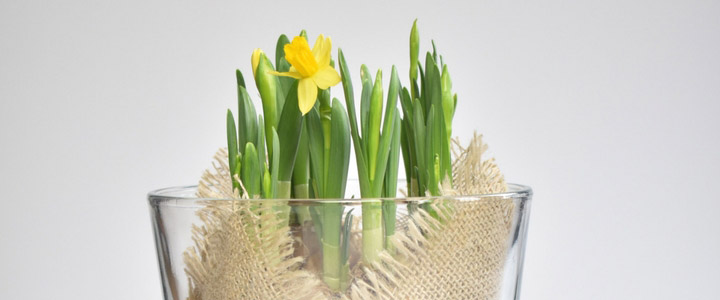 DIY Spring Bulbs Display Idea