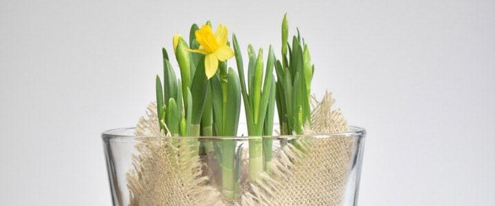 DIY Spring Bulbs Display Idea